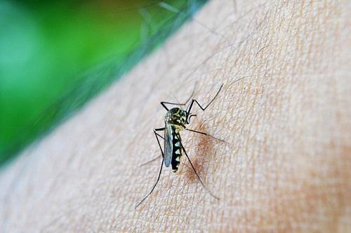 komarniki
